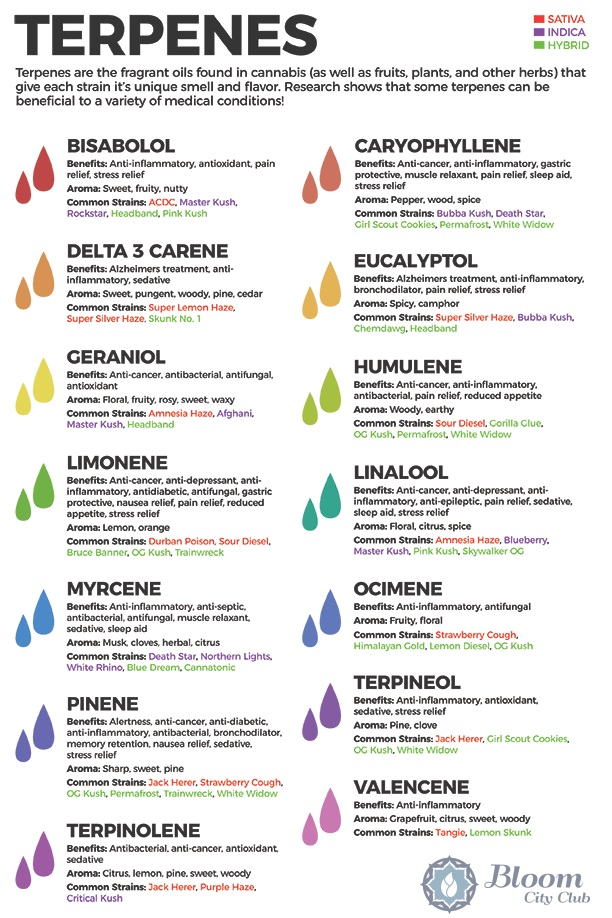 CBD Terpenes - About Our CBD Products